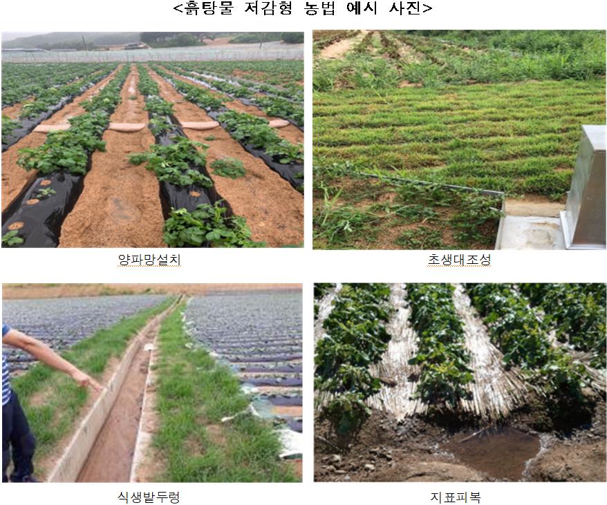 <흙탕물 저감형 농법 예시 사진 />  양파망설치  초생대조성  식생밭두렁  지표피복